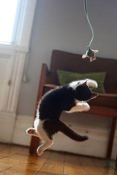 Airborne cat :3