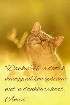 Dankie Here. Scripture Verses, Bible, Lekker Dag, Get My Life Together, Goeie Nag, Goeie More, Pinterest Images, Love Deeply, Good Morning Wishes
