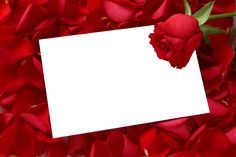 Large Transparent Horizontal Frame with Red Roses