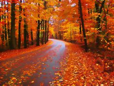fall colors in michigan. (indiana, really, but it looks exactly like a stretch of road in michigan. Fall Pictures, Pretty Pictures, Beautiful World, Beautiful Places, Nashville Indiana, Autumn Scenery, Belle Photo, Places To See, Nature