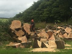 Tree Surgeons, Plymouth, Surgery, Wood, Woodwind Instrument, Timber Wood, Trees