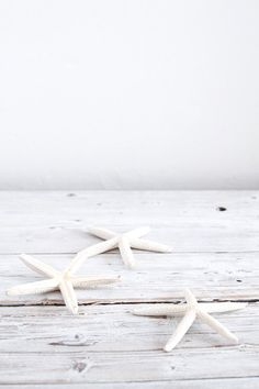 Natural white dried starfish, medium: Follow Studio/Etsy