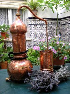 Extraction des huiles essentielles à l´aide d´alambic à colonne Copper Garden