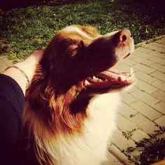 Sun is shining!♥ -Border Collie-