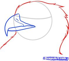 how to draw an eagle head step 4