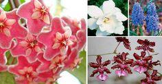 Plantas de interior aromáticas o perfumadas  Las plantas de interior con aroma o perfumadas so