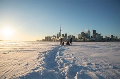 February stroll from Toronto Islands over frozen Lake Ontario.