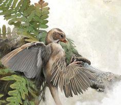 Four winged dinosaur (detail, work in progress) by Tom Björklund.