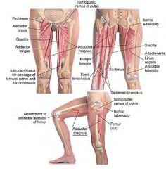 Basic Clinical Massage Therapy, awesome not lower bod exclusive, just the pic I chose...