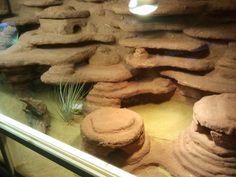 leopard gecko tanks - Google Search