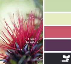 fresh brights- I really like the how aubergine/indigo plays with the muted pomegranite