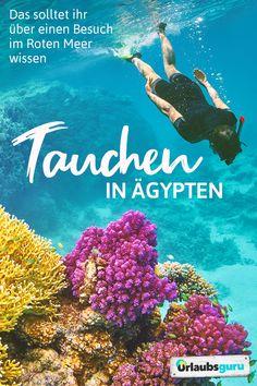 Seid ihr begeisterte Taucher und auf der Suche nach einem neuen Abenteuer unter dem Meeresspiegel? Oder Neuling auf dem Gebiet und einfach interessiert daran, wie es ist, abzutauchen und andere Welten zu erkunden? ich möchte euch heute von einem der schönsten Orte der Welt erzählen: Die Unterwasserwelt des Roten Meeres! 😍  #ägypten #tauchen #meer #meereswelt #travel Travel Activities, Vacation Trips, Diving, Egypt, Places To Visit, Beach, Holiday, Movie Posters, Berlin