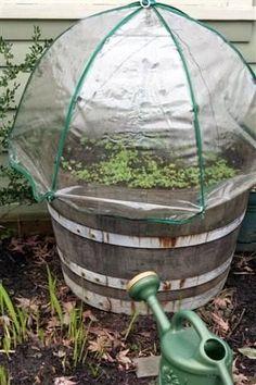 Umbrella Green House for Herbs