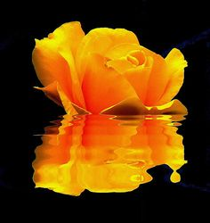 YELLOW ROSE REFLECTION http://www.redbubble.com/people/photowalker/works/1558143-yellow-rose-reflection?c=34716-reflections