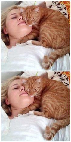 Почему кот спит на человеке: что означают его позы и выбранное место. Cat Room, I Love Cats, Dog Cat, Cute Animals, Kitty, History, My Love, Cats, Pet Dogs