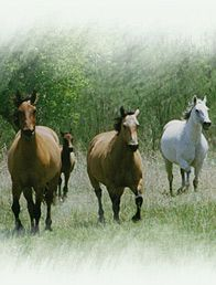 Unwanted Horse Coalition  New Book available: How to Start & Run a Rescue $20.00 to benefite the UHC's Operation Gelding Program