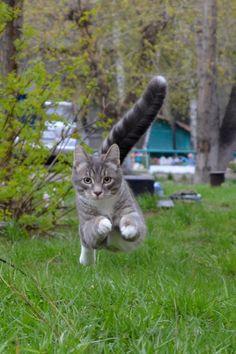 Running cat | cat, village, tree, house