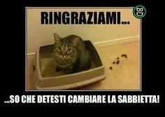 Ahhhh ecco! Anche la mia fa sempre così...non avevo capito niente, lo fa per farmi un favore!!!  #bastardidentro #gatto #lettiera #sabbia