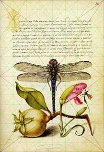 Dragonfly natural science illustration