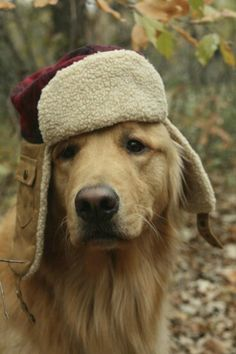 Golden Retriever in a hat Cute Puppies, Cute Dogs, Dogs And Puppies, Doggies, Animals And Pets, Baby Animals, Cute Animals, Tier Fotos, Retriever Puppy