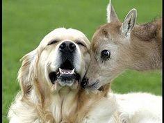 amicizia incredibile - guardate cosa fanno questi animali