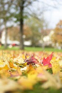 Die letzten Blätter by markus.huck, via Flickr
