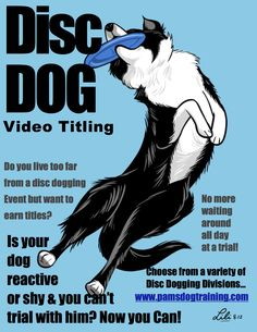 Earn Disc Dog Video Titles! No all day trials, reactive and shy dogs welcome, & live too far from a competition? Now you can earn titles by video! www.pamsdogtraining.com