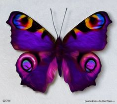 European Princess Butterfly Wings in Purple, Pinks, Yellow & Blue - Gallery Quality Canvas Art optio Purple Butterfly Tattoo, Butterfly Tattoo Meaning, Butterfly Tattoo Designs, Butterfly Painting, Best Tattoo Designs, Butterfly Wallpaper, Butterfly Wings, Butterfly Canvas, Tattoo Bunt