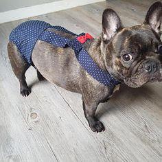 Culotte pour chien modèle STARS