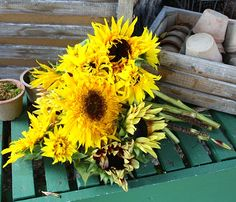sunflowers...Mabel's (Chris's grandma) favorite flowers:)