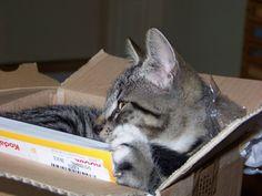 Fladde zit heerlijk in de doos.