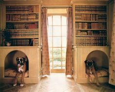 dog bed bookcases .... cool