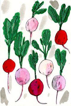 Illustrations by Elizabeth Graeber New work/ books/ patterns/ sketchbook drawings Plant Illustration, Illustration Sketches, Pattern Illustration, Food Illustrations, Veggie Box, Seed Packaging, Sketchbook Drawings, Fruit Print, Amazing Drawings