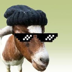 О жизни в деревне Cute Goats, Crochet Hats, Knitting Hats