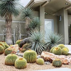 Cluster them amongst boulders - Design with Cactus - Sunset
