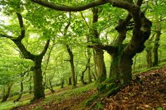 """Monthly Discussion: """"From the Forest"""" with Tales Of Faerie - April"""