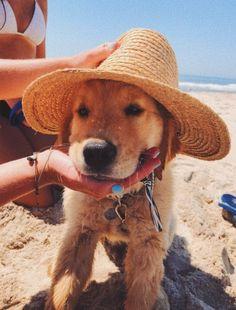 Super Cute Puppies, Cute Baby Dogs, Cute Little Puppies, Cute Dogs And Puppies, Cute Little Animals, Cute Funny Animals, Funny Dogs, Pet Dogs, Dog Cat