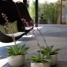 Check out plants. ESP the ones against far wall. Not too keen on chairs. From houzz