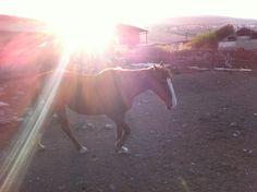 Beautiful horse Beautiful Horses, View Photos, Travel, Animals, Pretty Horses, Viajes, Animales, Animaux, Destinations