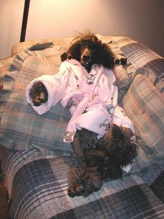 The Poodle Patch — Pampered Sophia…  of course!!!