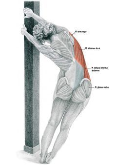 Compound stretch for better posture and movement is part of Weekly fitness Planner Ideas - Weekly fitness Planner Ideas Posture Exercises, Stretches, Hip Stretching Exercises, Forma Fitness, Yoga Muscles, Muscle Anatomy, Better Posture, Massage Benefits, Massage Therapy