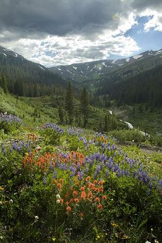 Brightly colored wildflowers decorate a high mountain valley in western Colorado. Places To Travel, Places To Go, Wildwood Flower, Colorado Wildflowers, Scenery Pictures, Crested Butte, Colorado Rockies, Heaven On Earth, Beautiful Places