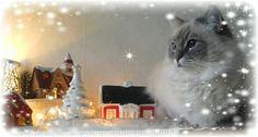 Misty.joulu-14