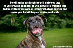 ❤️ there's nothing like the love of a boxer