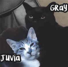 """koori-mizu: """" They look so much like Gray and Juvia! """""""