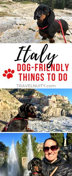 One of the most dog-friendly countries anywhere, check out my recommendations of things to do in Italy along with your dog, everywhere from archaeological sites to a royal palace.