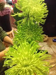Imagini pentru chrysanthemum petal cutter