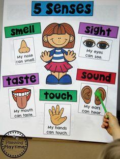 5 Senses - Preschool Anchor Chart – The 5 Senses - Five Senses Preschool, 5 Senses Activities, Preschool Charts, My Five Senses, Preschool Centers, Preschool Learning Activities, Preschool Themes, Preschool Science, Preschool Lessons