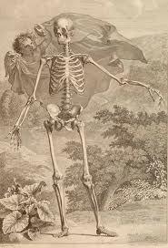real skeleton - Google Search