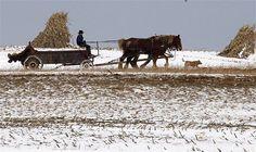 Amish farm scene with manure spreader